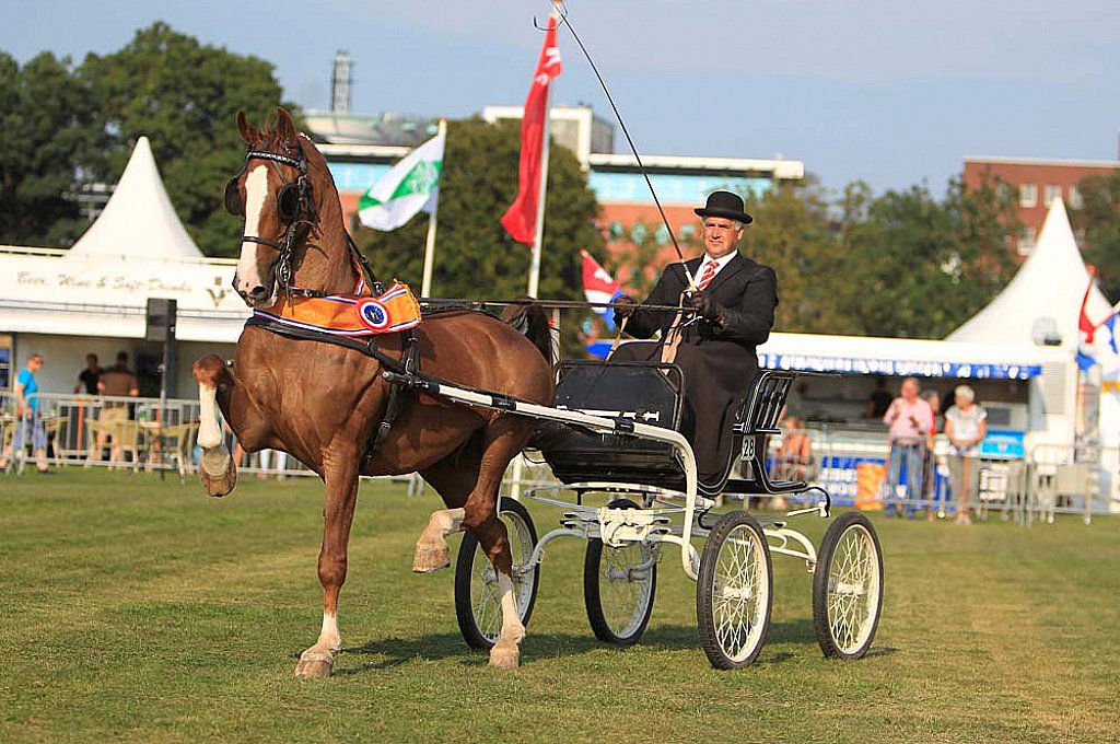 / After the success of the Dutch Harness Horse classes during the last editions of Driving Valkenswaard International, the horses will be returning to Exell Equestrian in Valkenswaard on Sunday 2 June in full force.