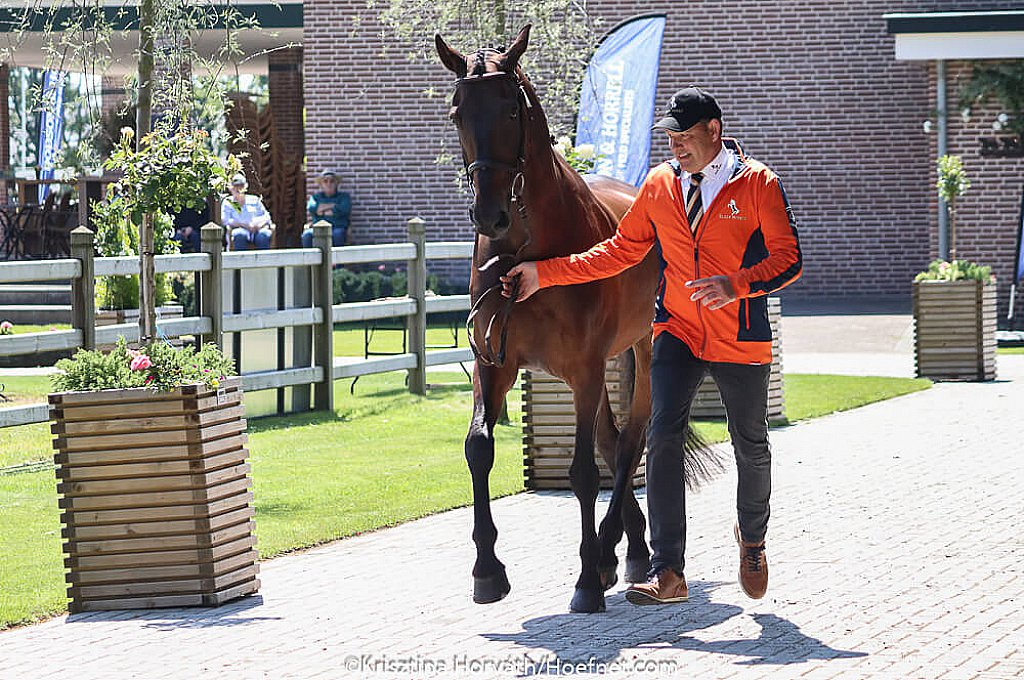 Driving Valkenswaard 2019: One horse not deemed fit / This morning the National Four-in-hand competition and 3-star pairs competition kicked off with the veternian check. Only one horse, of over 260 horses in total, was not deemed fit to compete.